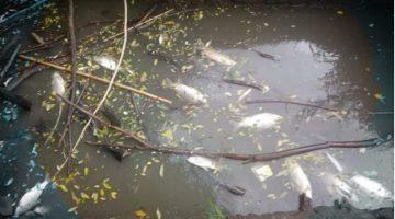 """""""Pluma de Río"""": Movilización por agua y por tierra para visibilizar la contaminación de nuestros ríos del Delta"""